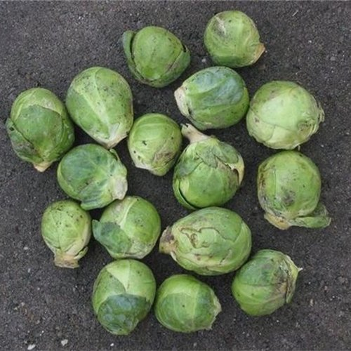 Make a delicious and healthy side dish for the holidays using fresh, locally grown and seasonal Brussels sprouts.