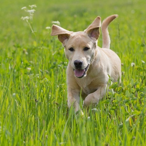 Having a pet dog is very good for your health in a variety of ways.