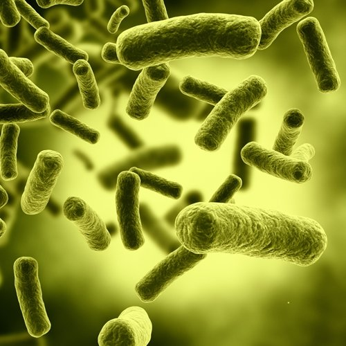 Intestinal flora could be a primary factor for obesity.
